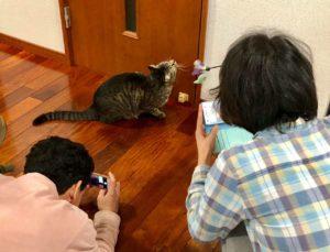 猫撮影をさらに後ろから撮られるの図