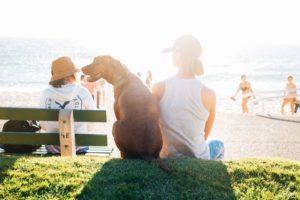 海岸のベンチに座る男性と犬の後ろ姿