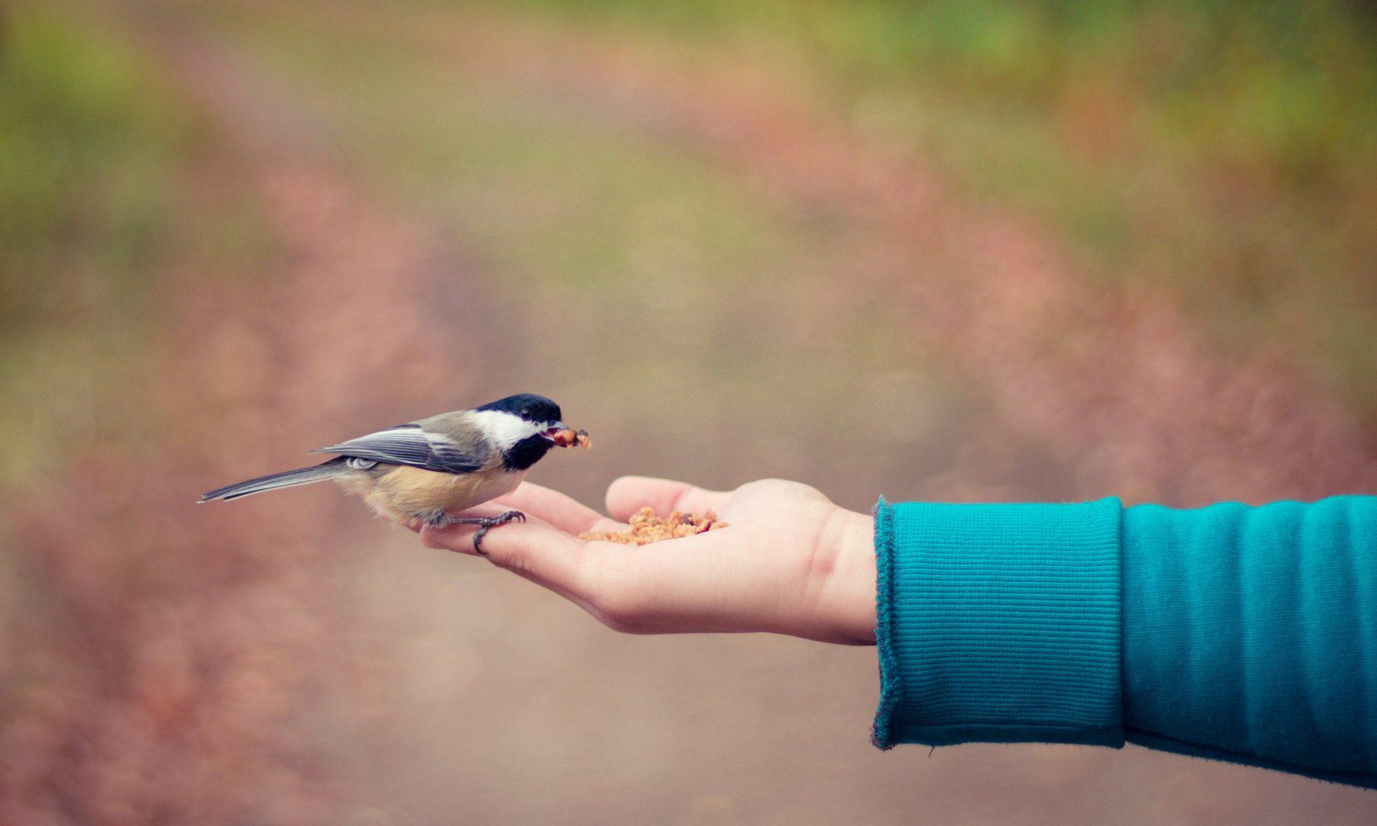 餌で手にのった小鳥