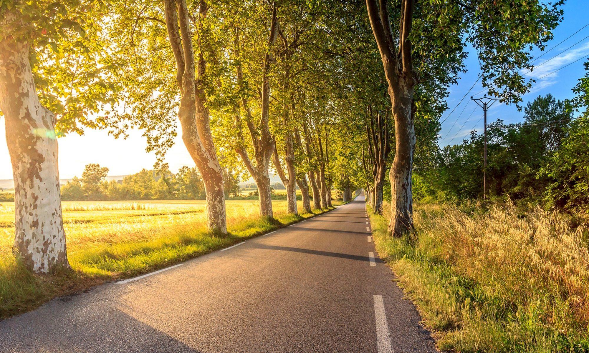 日差しが注ぐ景観の中の道