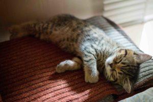 くつろいで眠る猫