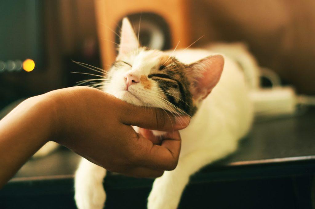 喉を撫でられて幸せそうな猫