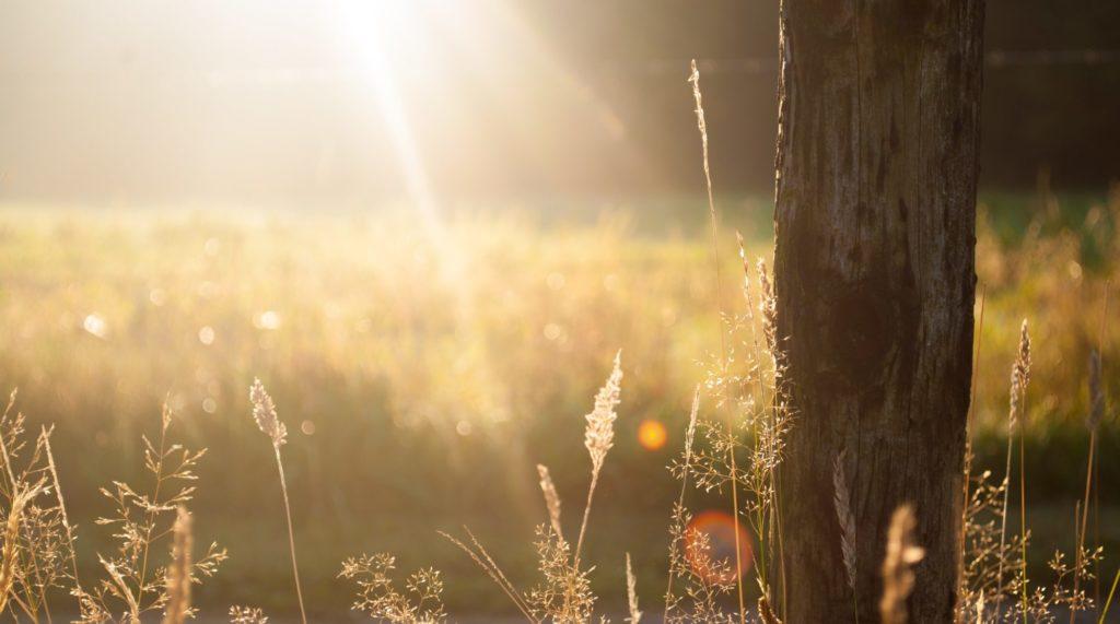 光で輝く草原