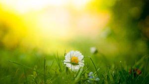 お花と暖かい光