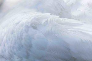 白い天使のような羽根