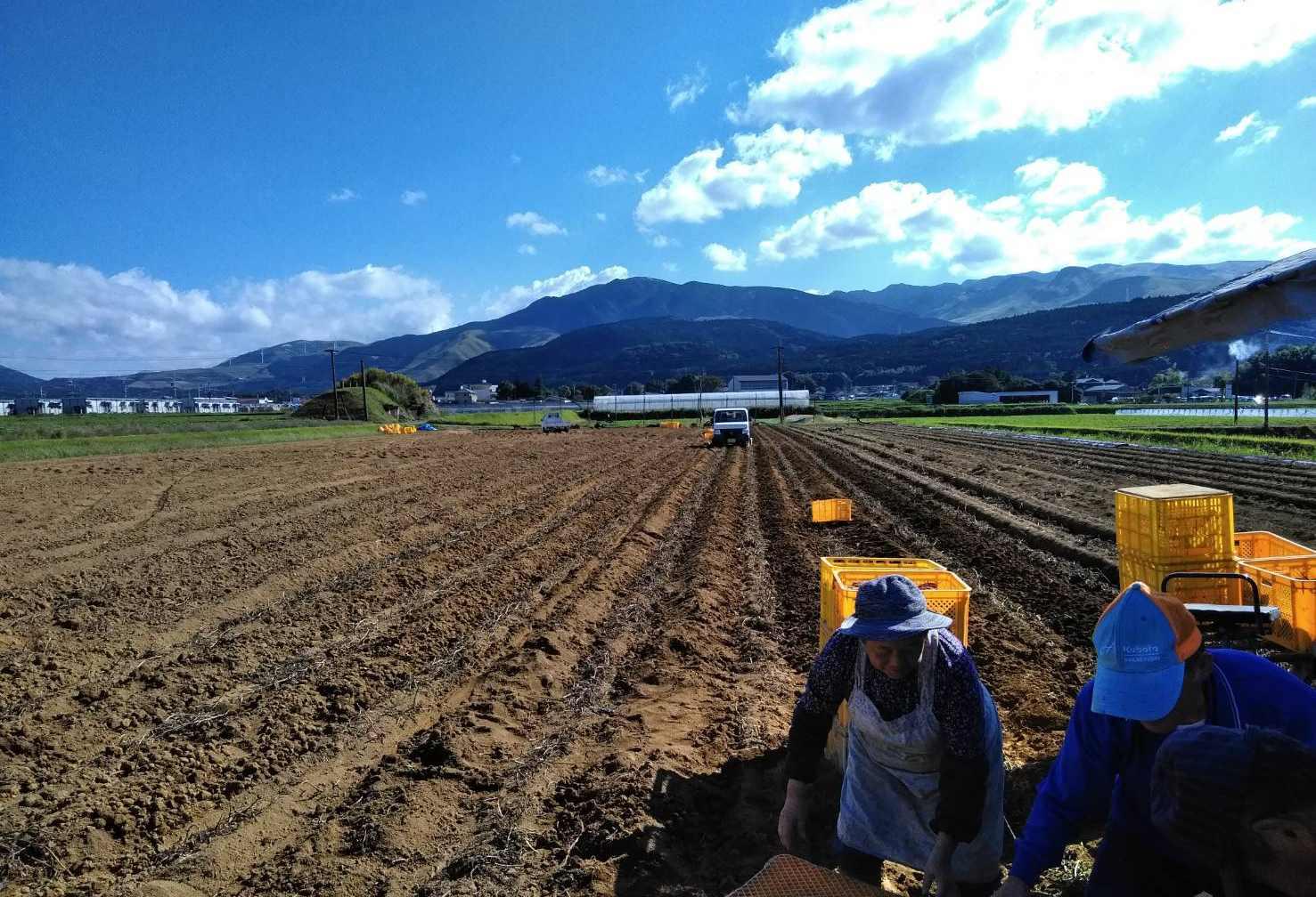 熊本農家の畑の様子