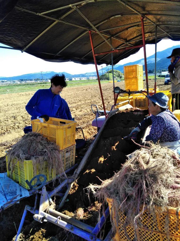 農業ボランティアの様子