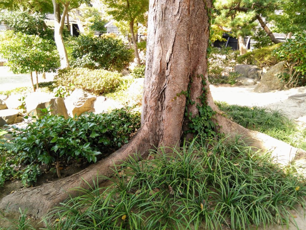 庭園の木の根本