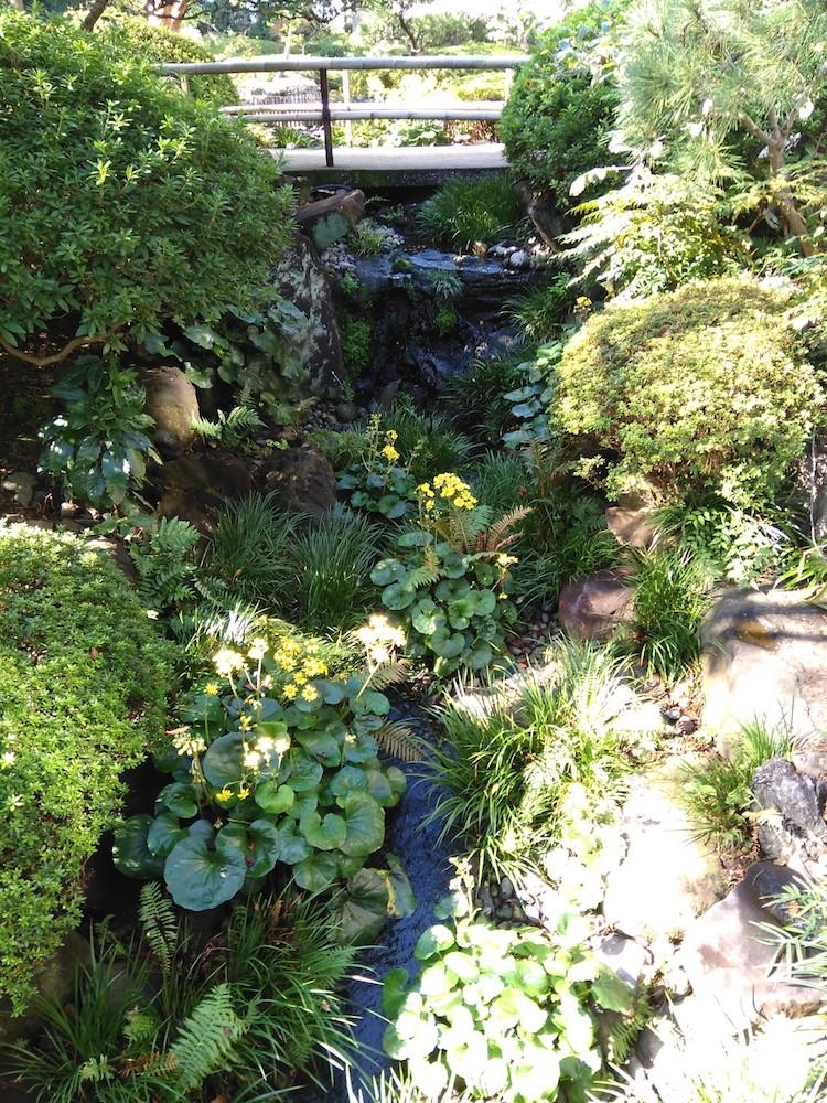 日本庭園 小川