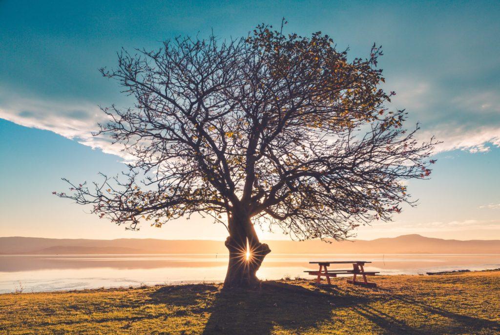 青空と大地と木