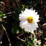 可憐な野花