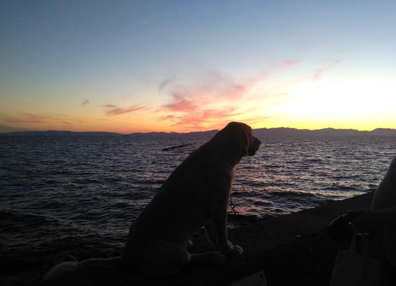 夕日を見つめる犬