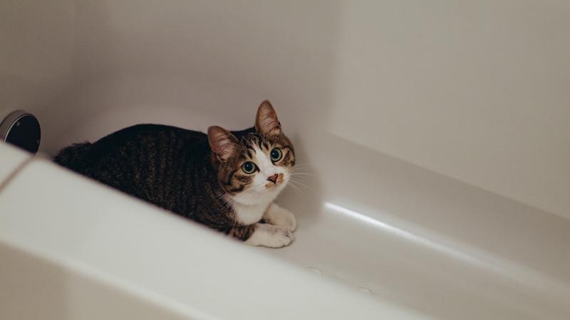 お風呂に隠れる猫