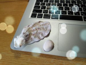 拾ってきた貝殻